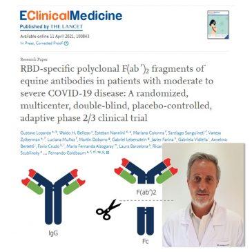 """Publicaron en una revista del grupo """"The Lancet"""" el estudio clínico de fase 2/3 sobre el uso de suero equino hiperinmune en pacientes con COVID, con resultados muy alentadores"""
